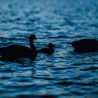 Episode #145: COVID-19 Analysts, Policy, and Black Swans with Gary Angel